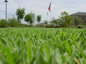 Sod Mowing Tips