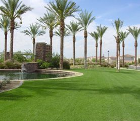 Sod by pond with palm trees