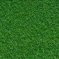 Tifgreen Sod close up