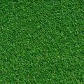 Tifgreen Sod Grass