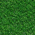 Close up picture of Tifway sod