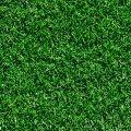 Tifway Sod Grass
