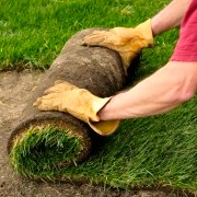 A man rolling new sod into a yard.